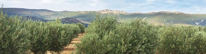 Entorno del olivar de Oleoext: Sierra de Altamira, en los Montes de Toledo, Cáceres
